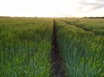 Barley – Commander – 7 September 2012 - Photo 2